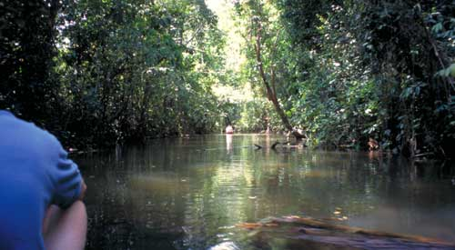 Belize, San Igancio: River trip to the caves of Barton's Creek