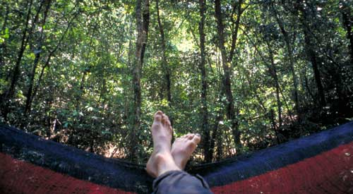 Belize, Cockscomb Basin Wildlife Sanctuary: Mein Blick in den Dschungel