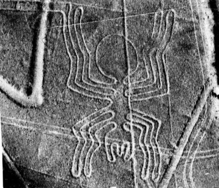 Peru Nazca Spinne