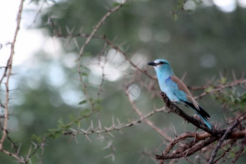 sekretär vogel tansania ~ reisebericht 2009 tansania – die besten bilder – vögel
